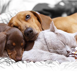 Helping with tapeworms in dogs and cats