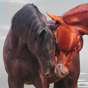 Horses, vitamins and minerals