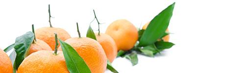 Natural horse supplements - Itch Mix - Citrus