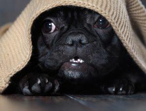 anxious dog holidays
