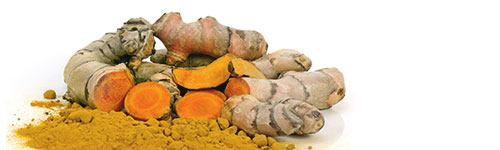 Natural horse and dog supplements - Pure range - Turmeric