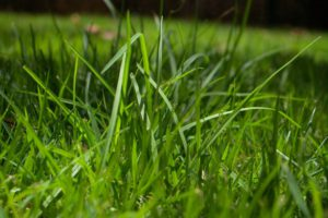 grass - contributing to vitamin a for horses