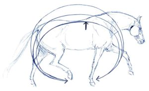 topline in horses